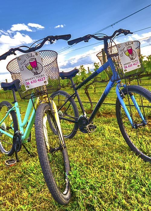 bike rental in the vines